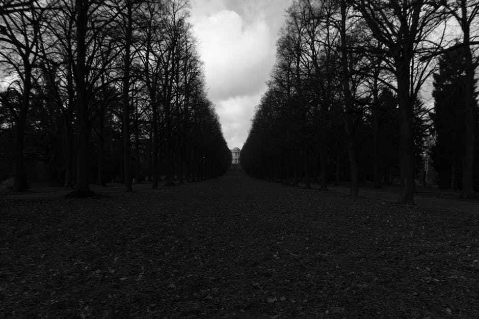 Black Forest (Black and White Park)